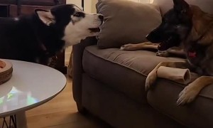 Doggy Disagrees With Sharing Toy