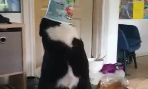 Kitty Gets More Ice Cream than It Bargained For