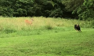 Wild Deer and Doggy Play Friendly Game of Tag