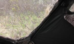 Close Encounter with Curious Black Bear