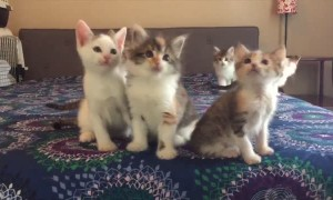 Precious Kittens Adorably Moving Their Heads In Sync