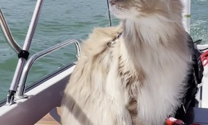 Fluffy Feline Helps Owner Navigate Boat Ride