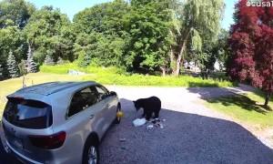 Dude Throws Dodgeball at Bear