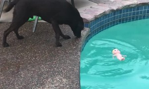 Dog Throws Doll into the Drink