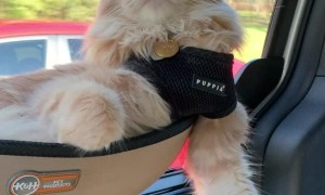 Cat Rides in Comfort for Road Trip