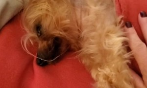 Sleepy Dog Struggles with Mornings