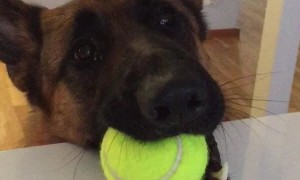 Dog Hilariously Lets His Best Friend Know That It's Playtime