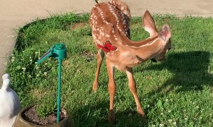 Bambi Plays with Solar Powered Butterfly