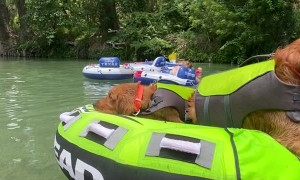 Golden Retrievers Travel Down River in Style