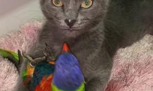 Kitty and Bird Enjoy Unlikely Cuddles