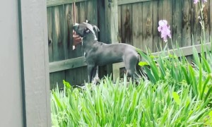 Pup Gets Pets From Fingers at the Fence