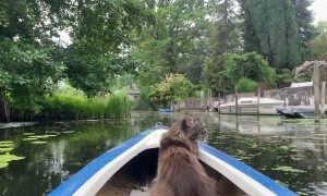 Kayaking Kitty Goes for Calm Ride in the Rain
