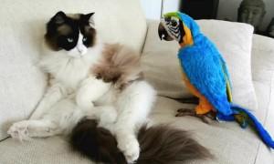 Kitten Meets