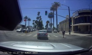Driver Stops to Help Save Puppy Wandering in Traffic