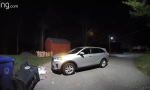 Black Bear Breaking into Garbage is Spooked Away