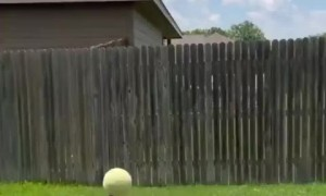 Extremely talented dog shows off balancing skills