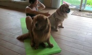 Big Happy Dogs Help Out With Workout