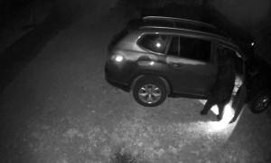 Black Bear Opens Car Doors