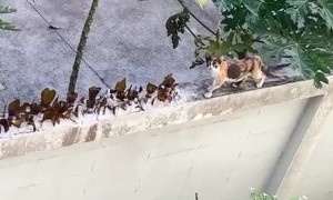 Stray Cat Easily Navigates Protected Wall