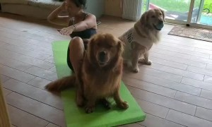 Dogs Help with Ab Day