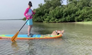 Fluffy Kitty Paddleboards into the Weekend