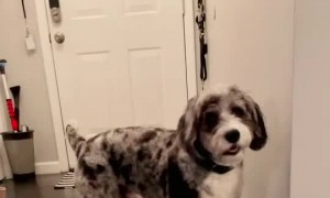 Puppy stops playing with toy to tell owner her loves her