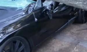 Fancy Car Flattened by Fallen Tree