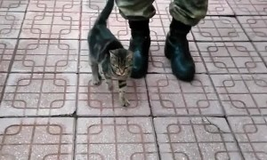 Kitten Marches with Soldier