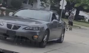 Angry Raccoon Chases Girl Away
