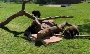 Bearly Time for Recess