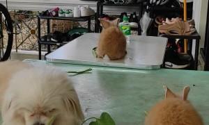 Dog Joins Rabbits for Dinner