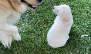 Doggy Unboxes New Best Friend