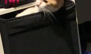 Cute Cat Stuck in Box