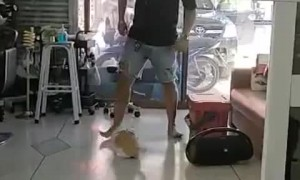 Cat Likes When Human Pushes Her on Slick Floors