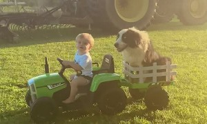 Boy Takes Border Collie on Tractor Ride