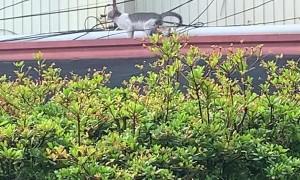 Bird Pecks at Cat's Back