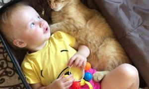 Kitty and Baby Climb Into Suitcase Together