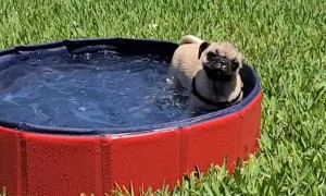 Puppy Adorably Enjoys Holiday Weekend In Her Favorite Pool!