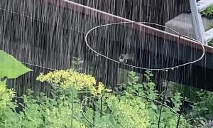 Joyful Hummingbird Takes Summer Shower