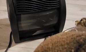 Cat Battles Cold Airflow