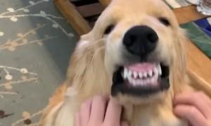 Scratches Make Dog Pull Strange Face