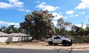 Tree Pulled Down With Trusty Ford