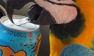 Cool Parrot Opens Can