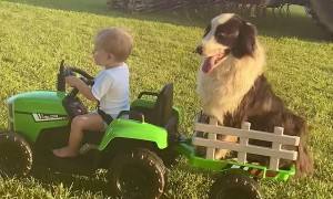 Boy and His Dog Ride Around in Toy Tractor