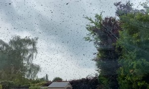 Bee Swarm Surrounds Home