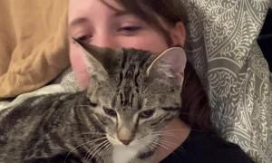Random Cat Climbs Through Window for a Cuddle