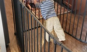Baby Gate Can't Hold Back Determined Baby