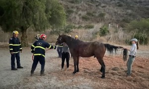 Helicopter rescue of horse trapped in concrete debris in California
