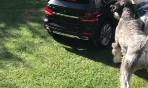 Puppies Jealous of Sibling's New Ride