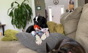 Doggy Relaxing With Favorite New Toy